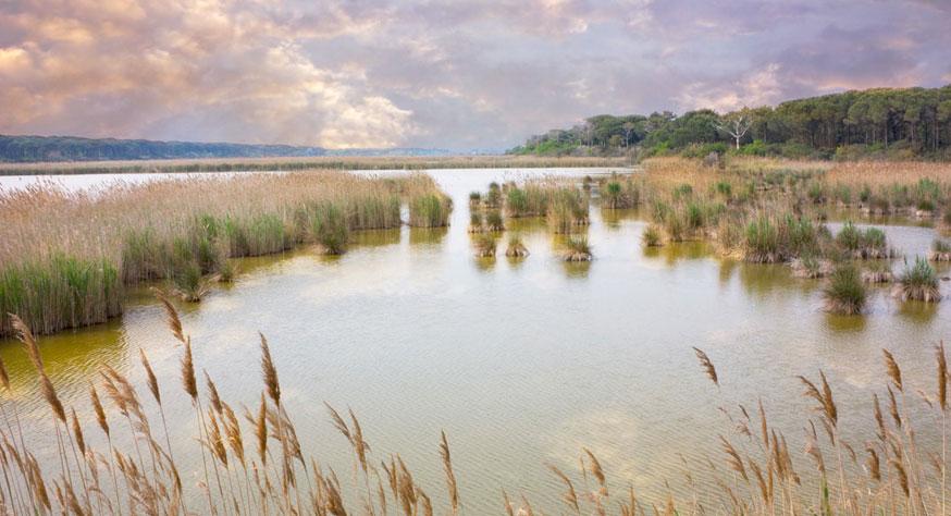 wetland-mauve